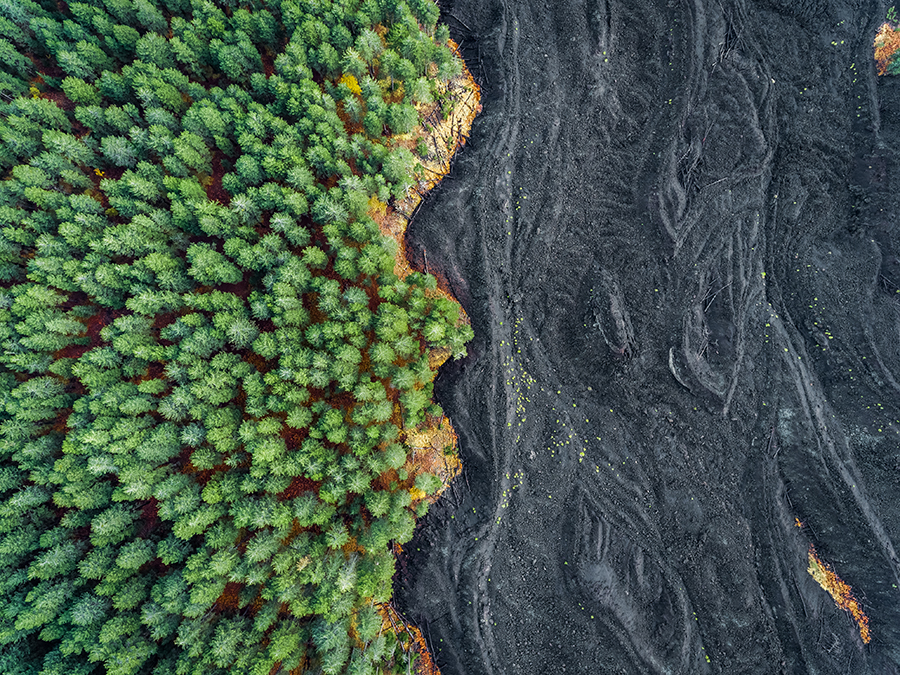 Lava meets Forest
