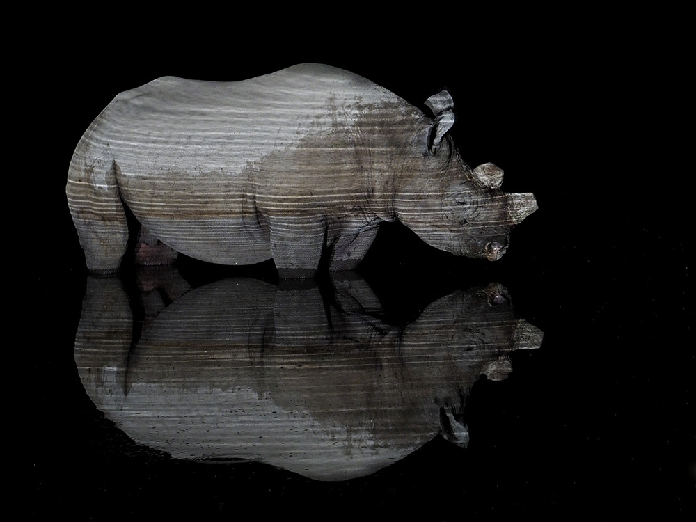 Black Rhino reflction at night
