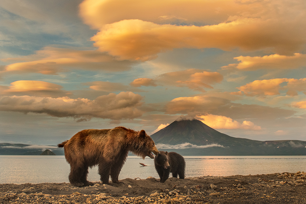 Bear Mother Fighting to Survive
