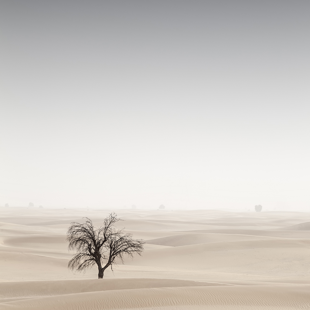 A Desert in Transition