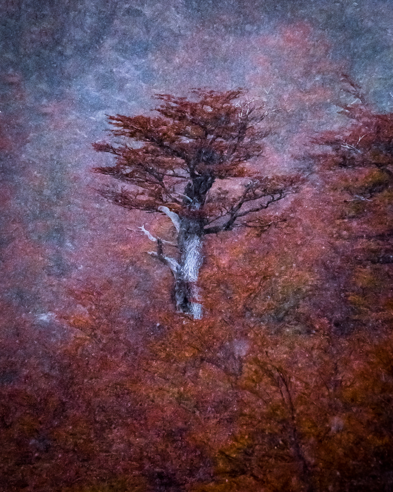 Trees of Patagonia