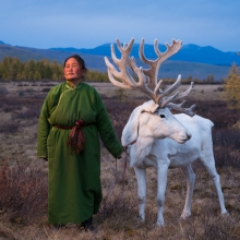 Tsaatan Woman with Reindeer
