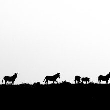 African wildlife silhouettes