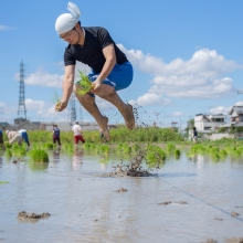 The Levitation Rice Planting