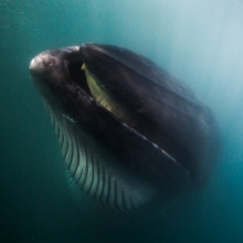 a rare encounter with a bryde's whale