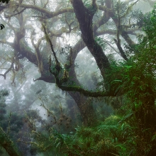 Reunion Island Forest